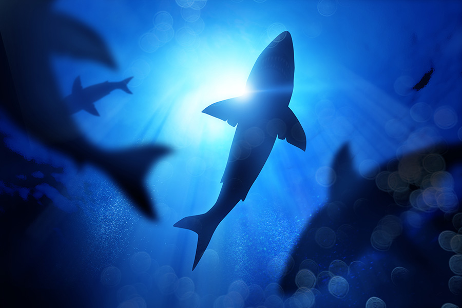 What Can We Do